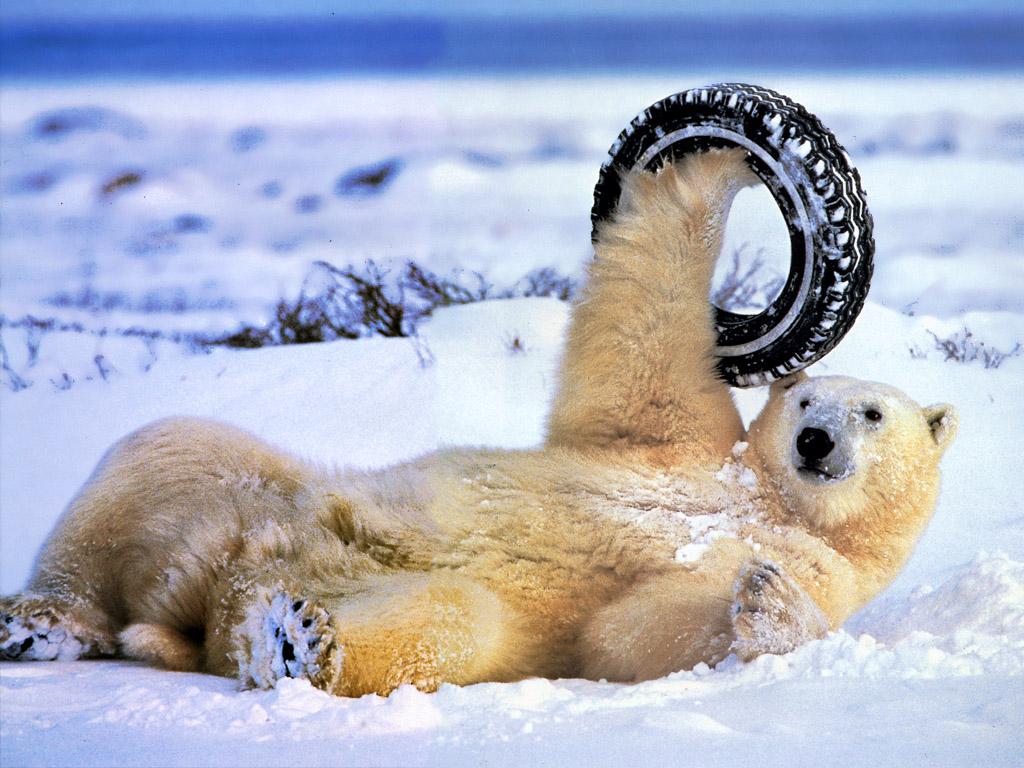 polar bear tyre